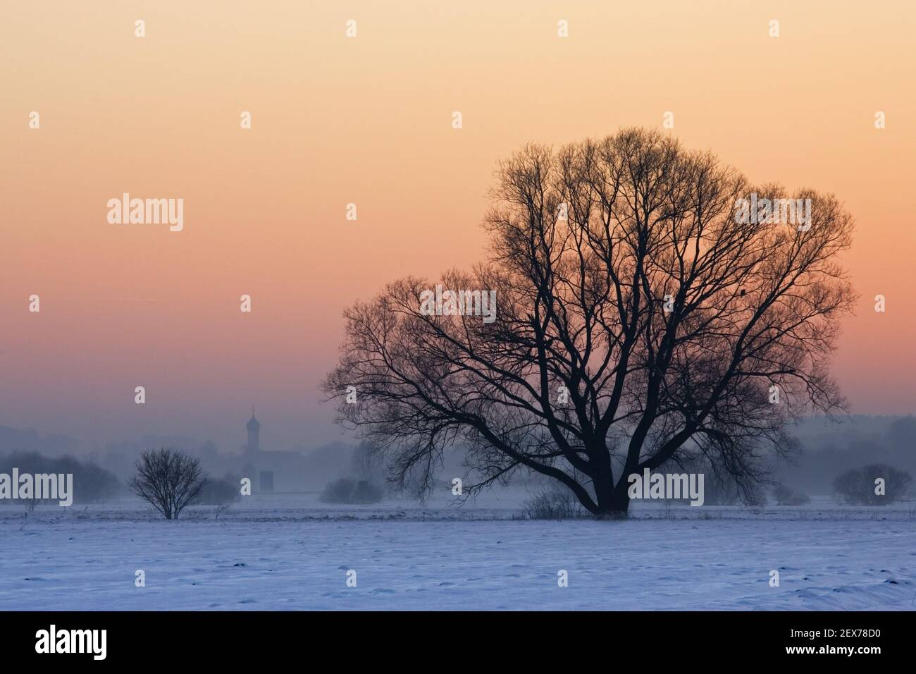 Sunset over the snowy fields with trees and church in the background, Bayern, Germany, Sunset over the snowy fields with trees a Stock Photo