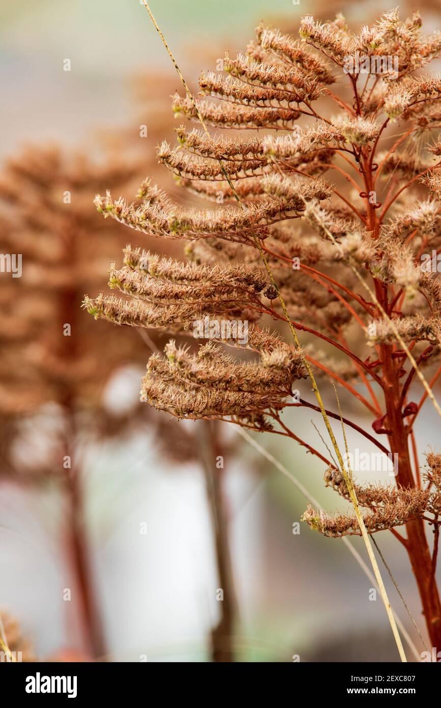 Fotografía cerrada de una flor. Concepto de naturaleza Stock Photo