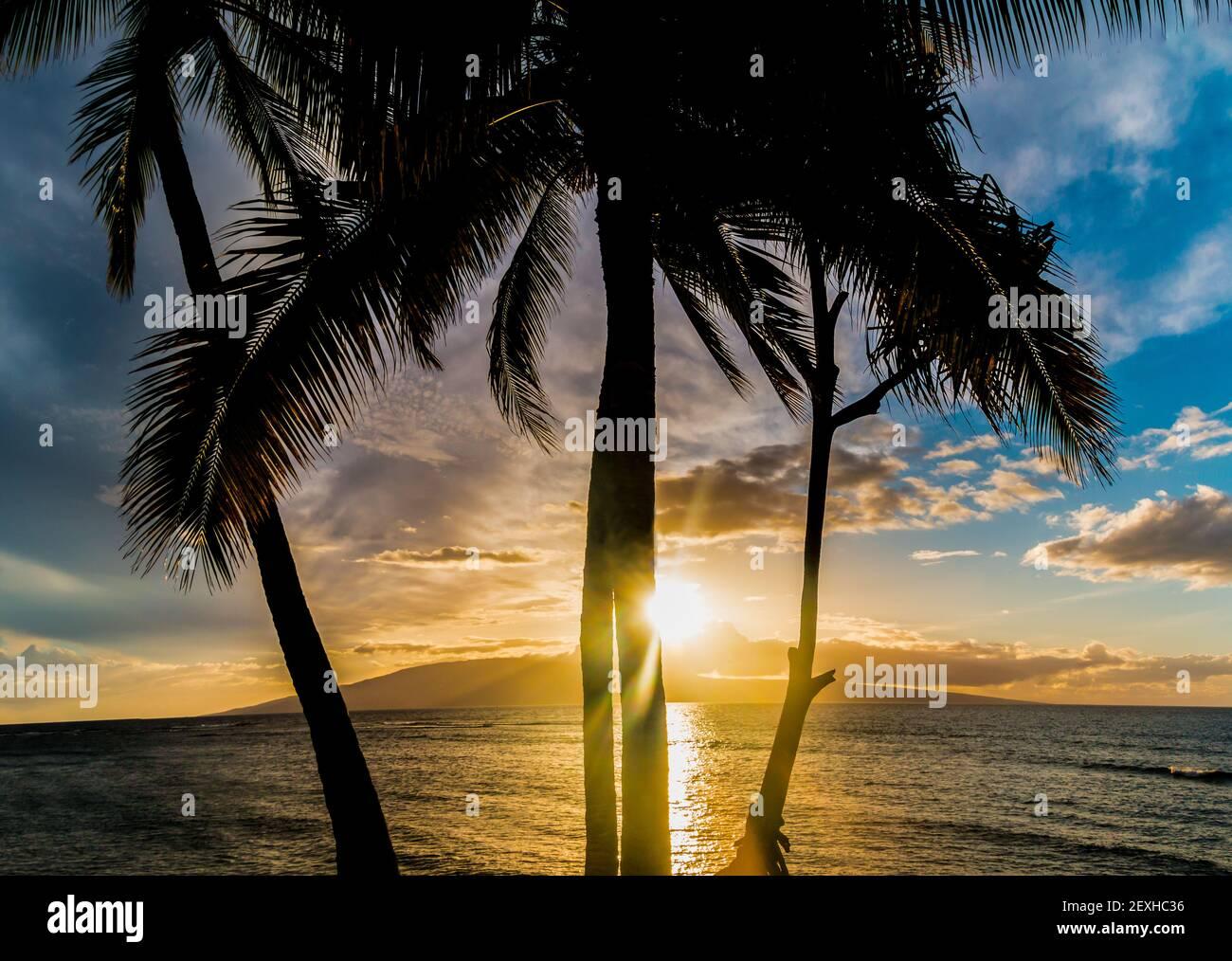 Sunset Over Lanai With Palm Tree Silhouette, Across Lahaina Bay, Maui, Hawaii, USA Stock Photo
