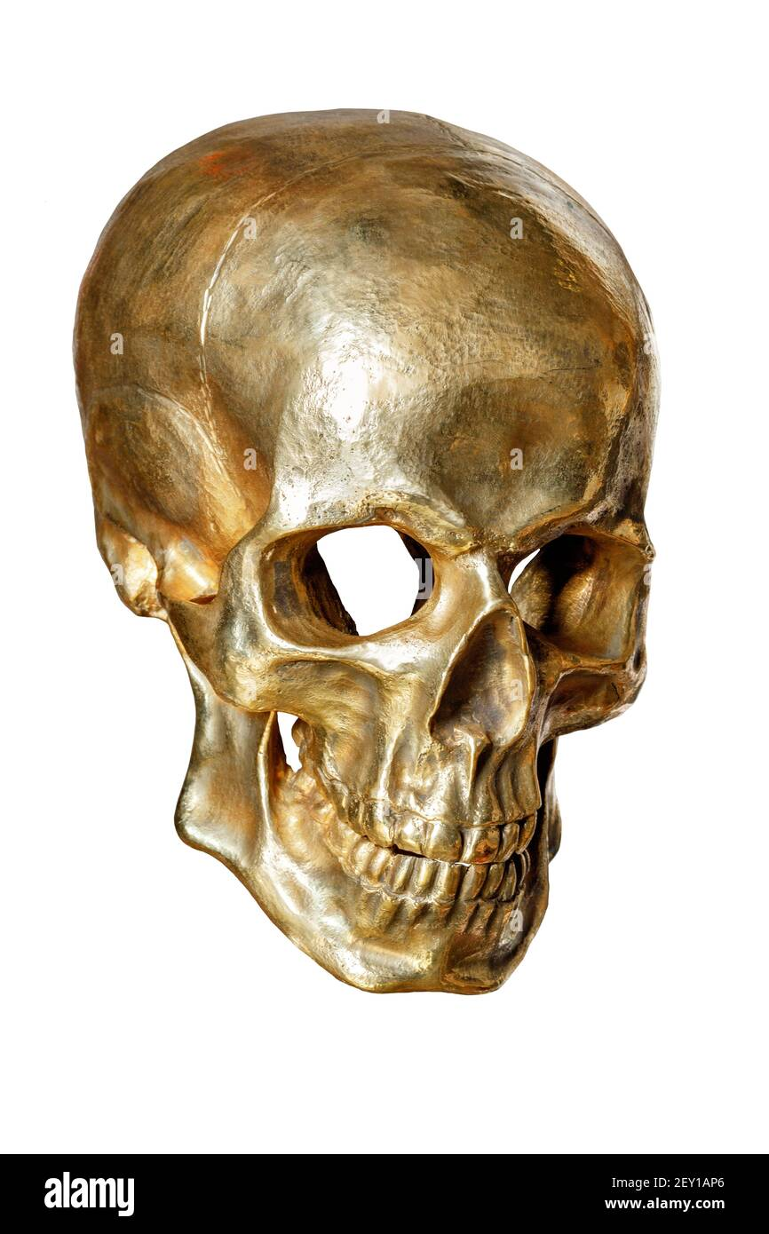 The skeleton of a human skull is painted with gold paint, isolated on a white background, close-up. Stock Photo