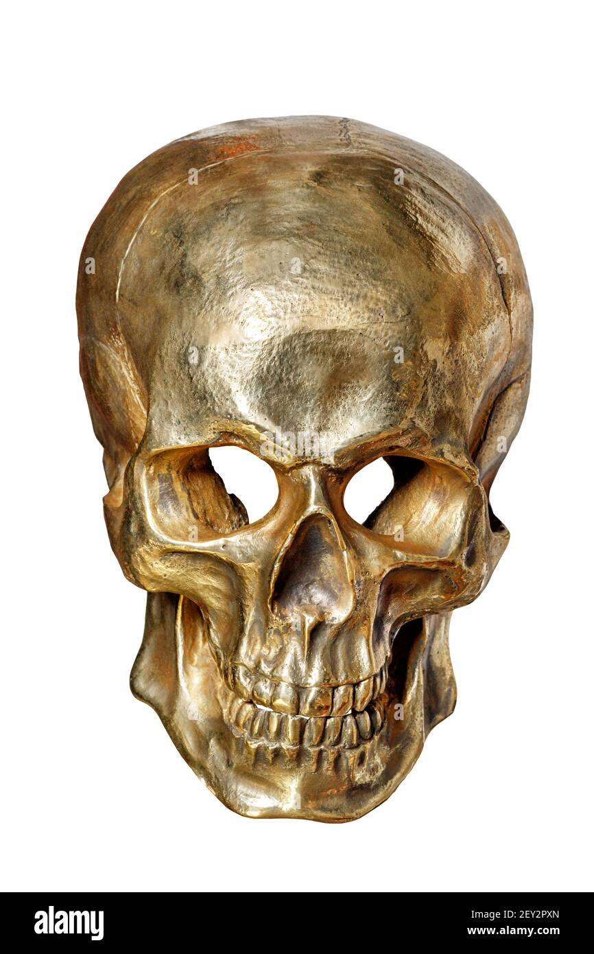 The skeleton of a human skull is painted with gold paint, front view, on a white background close-up. Stock Photo