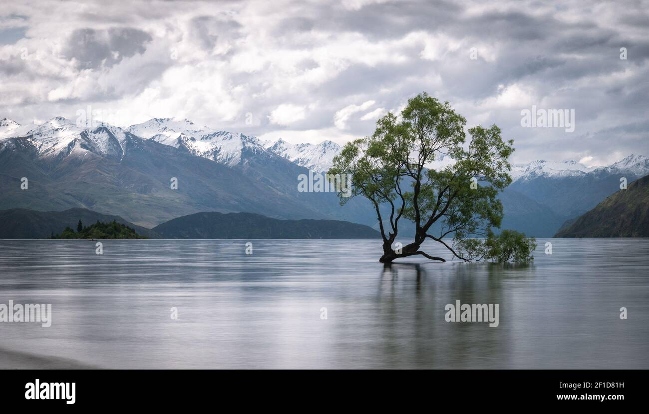 Willow tree growing in the middle of lake with mountains backdrop. Shot of famous Wanaka Tree from New Zealand made during overcast day. Stock Photo