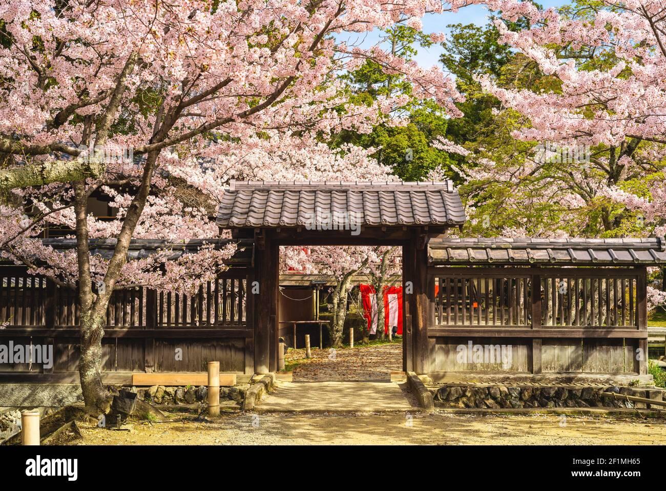 Daikaku ji Temple with cherry blossom at arashiyama, kyoto, kansai, japan Stock Photo