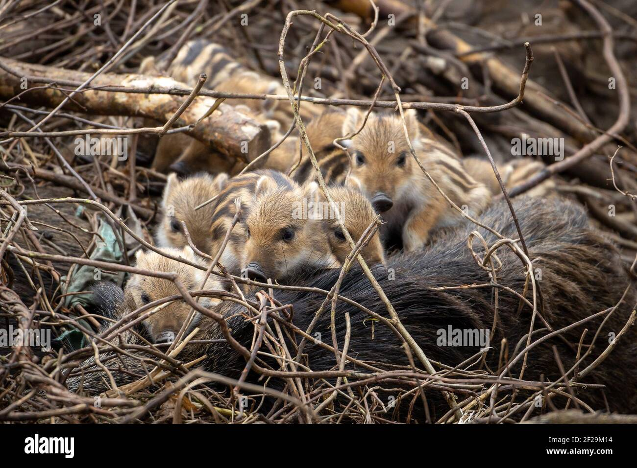 Animals reasons for hunting 5 Animals