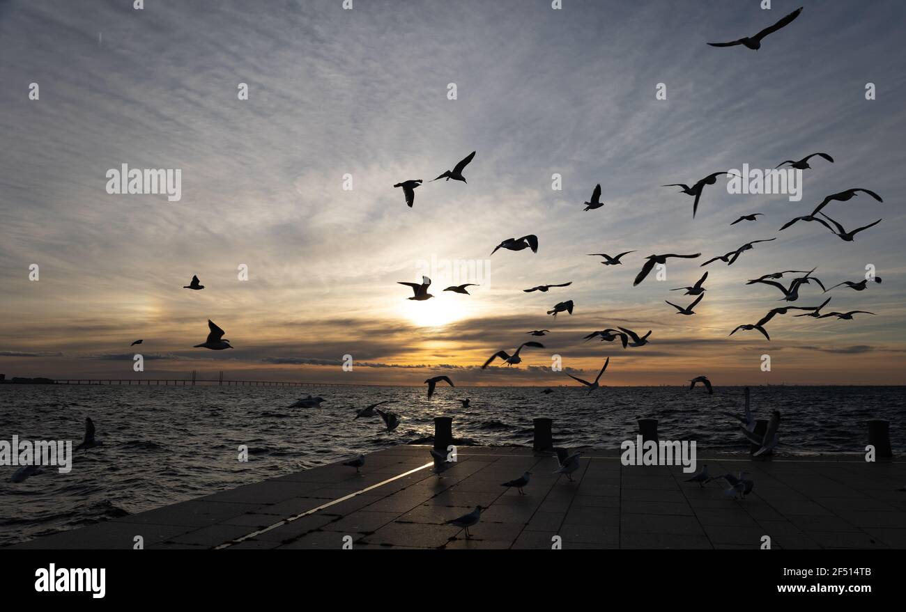 Halo on the sky and seagulls flying above the sea  Stock Photo