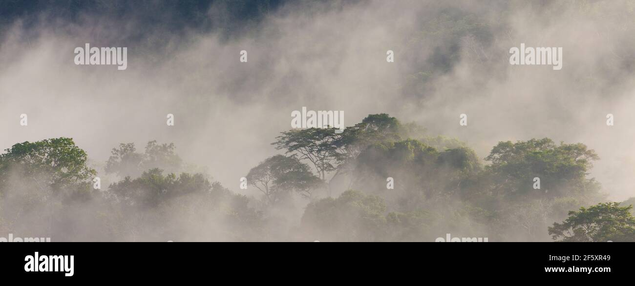 Panoramic view of damp and misty rainforest in early morning sunlight in Soberania national park, Colon province, Republic of Panama. Stock Photo