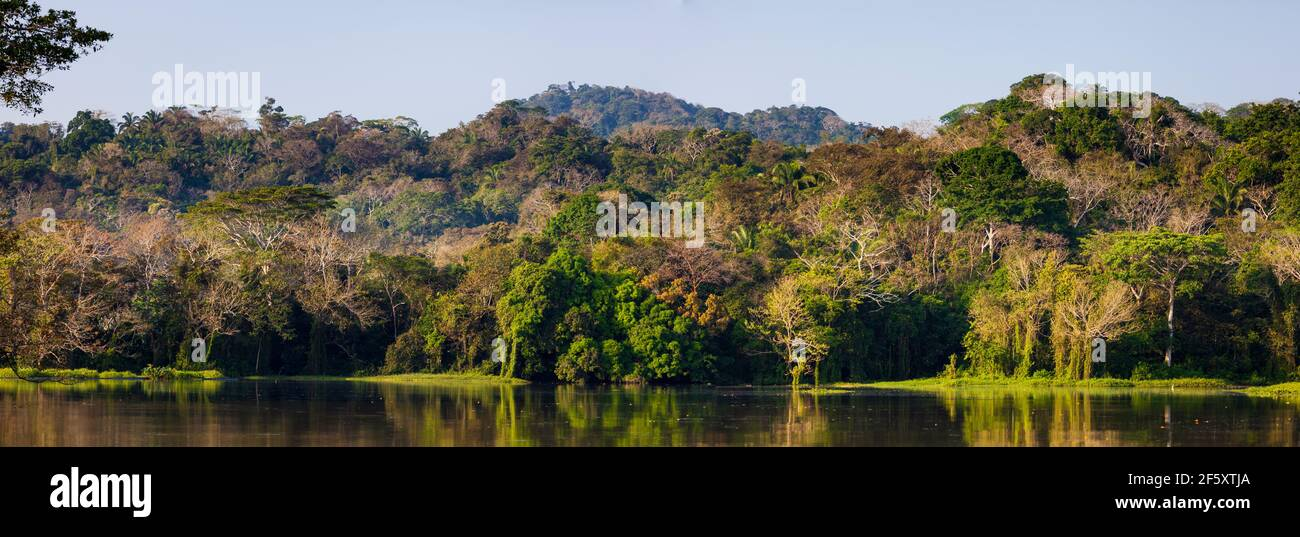 Beautiful rainforest in early morning sunlight in one of the sidearms on the west side of Gatun lake and the Panama Canal, Republic of Panama. Stock Photo