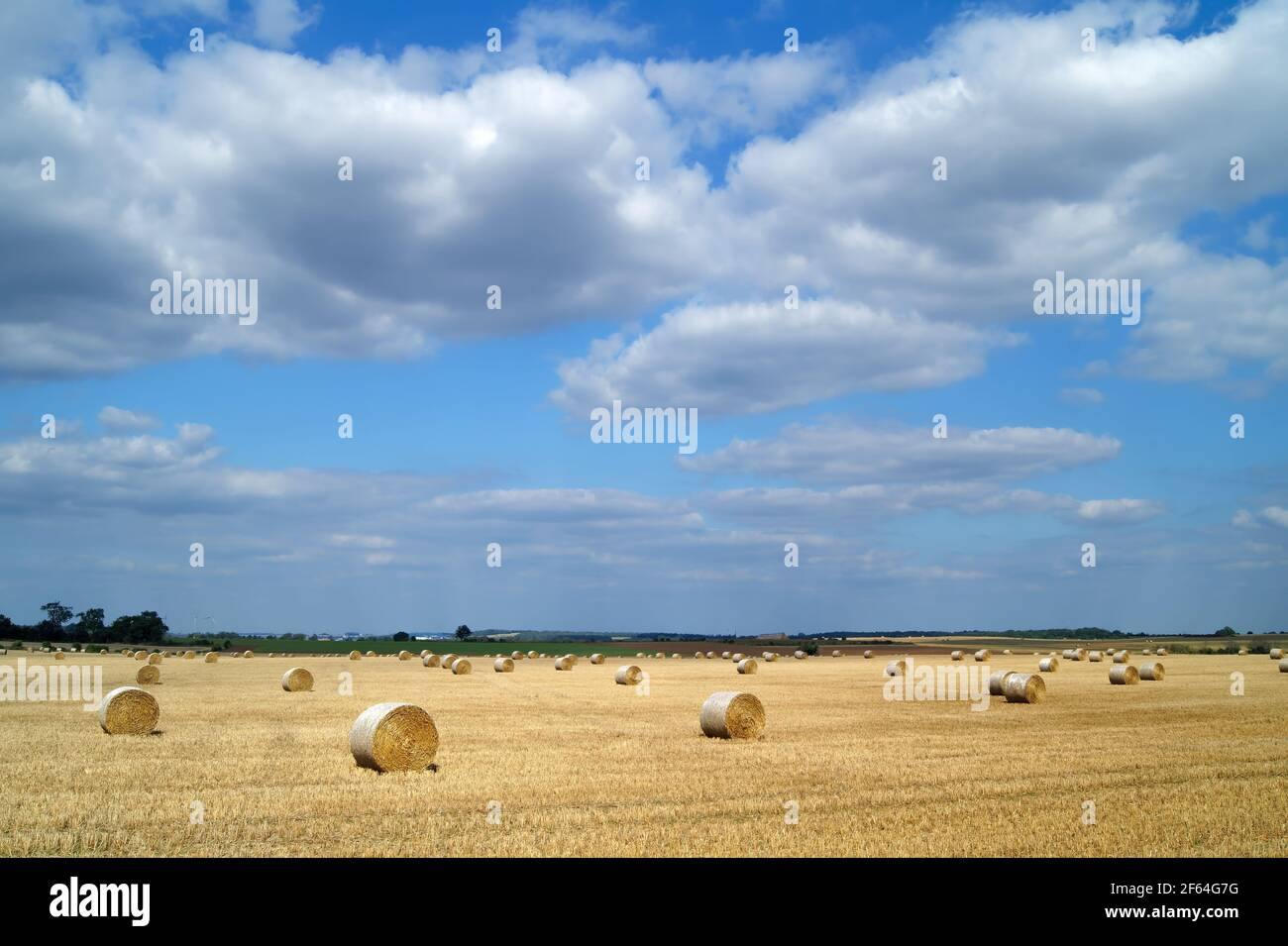UK,South Yorkshire,Doncaster,Drum Hay Bales in Field near High Melton Stock Photo