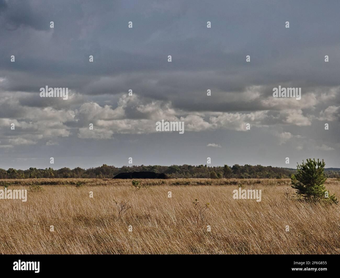 Moorlandschaft - Moorweg mit Reifenspuren - Kumuluswolke Stock Photo