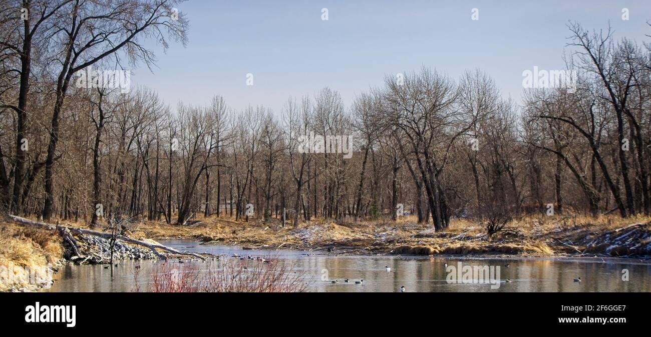 Inglewood Bird Sanctuary & Nature Calgary Alberta Stock Photo