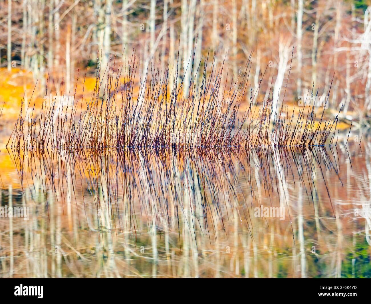 Lokve lake in Croatia Europe Stock Photo