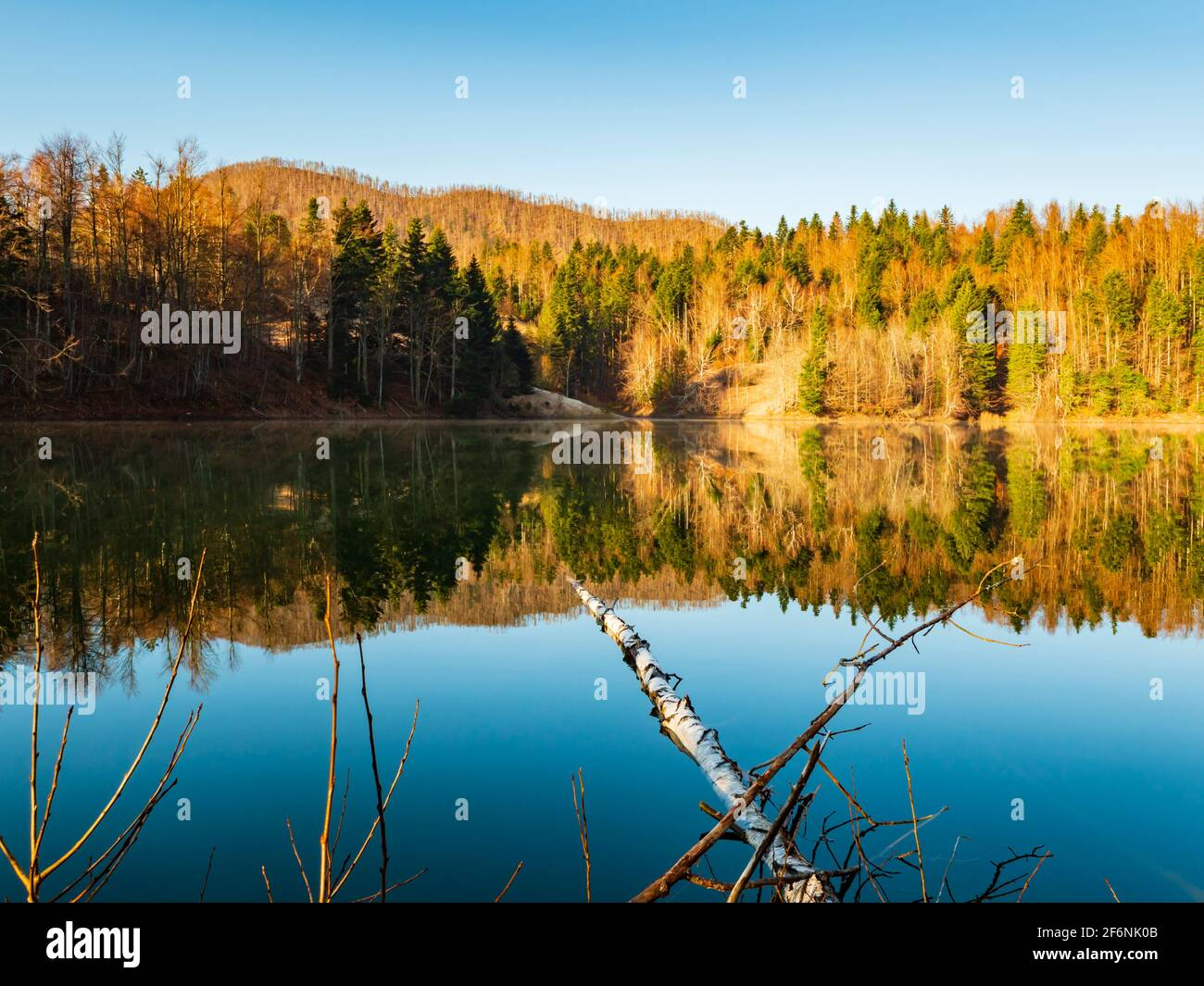 Fallen tree on surface Lokve lake in Croatia Europe Stock Photo