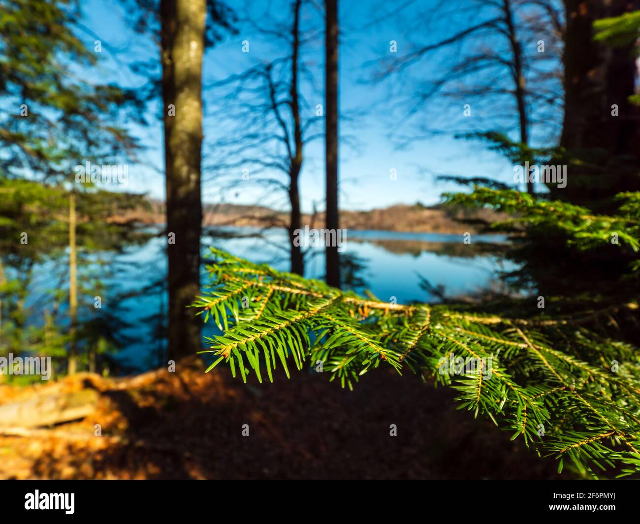 Green evergreen branch detail isolated before slightly blurry idyllic remarkable appealing Lokve lake in Croatia Europe Stock Photo