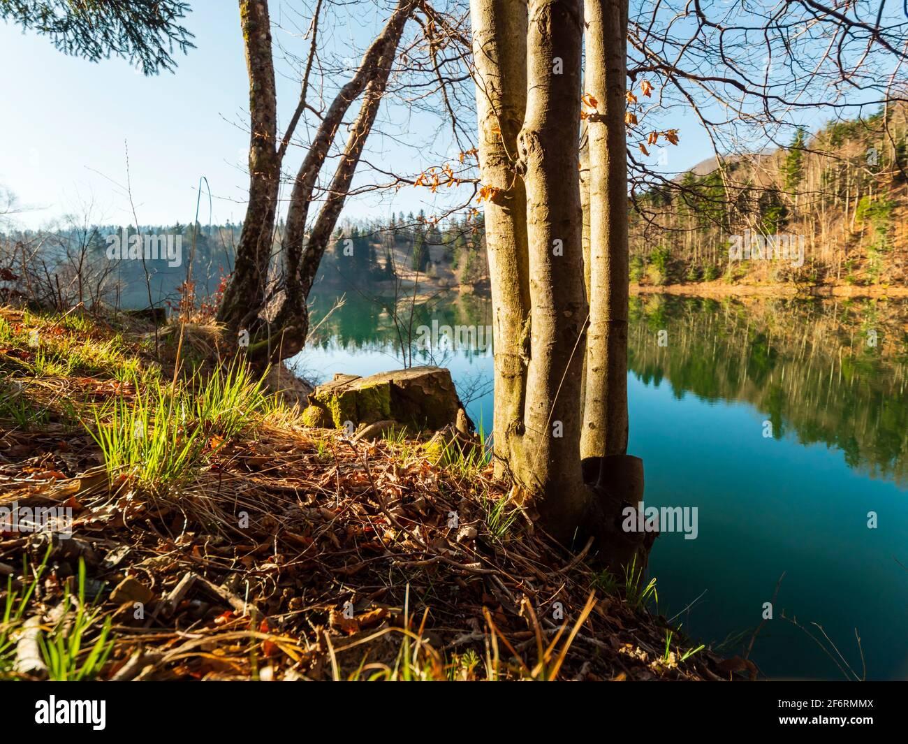 Stump picturesque peaceful tranquility Lokve lake in Croatia Europe Stock Photo