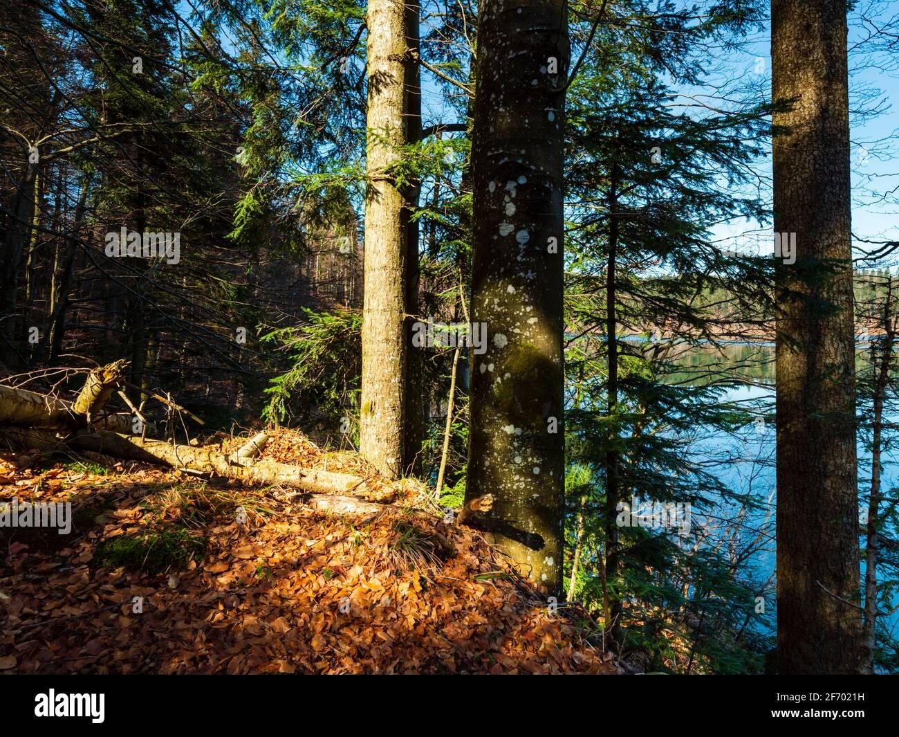 Forest near Lokve lake in Croatia Europe Stock Photo