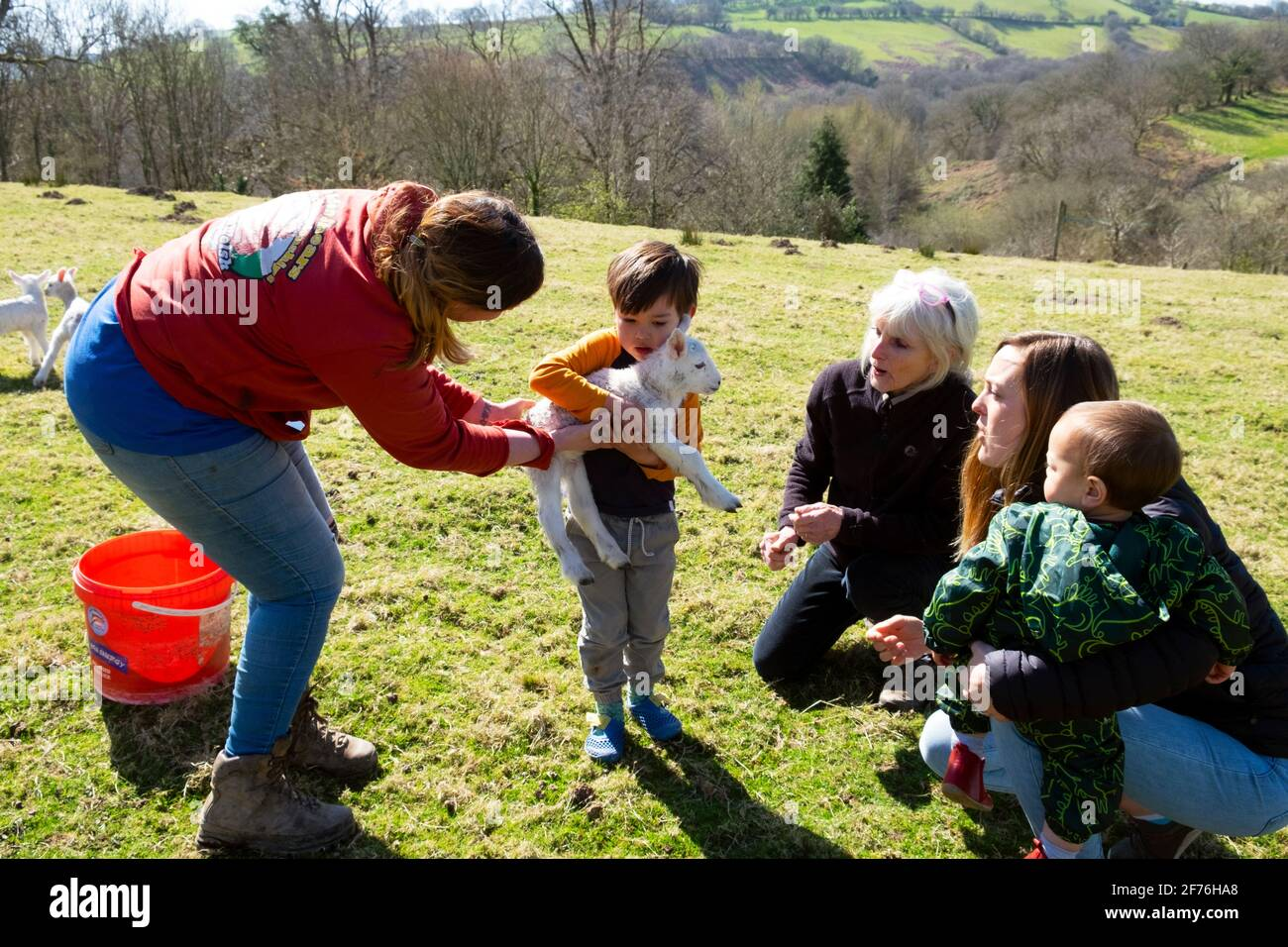 Woman farmer at lambing time showing lamb to little boy and family on farm holiday in spring Carmarthenshire Wales UK Great Britain  KATHY DEWITT Stock Photo