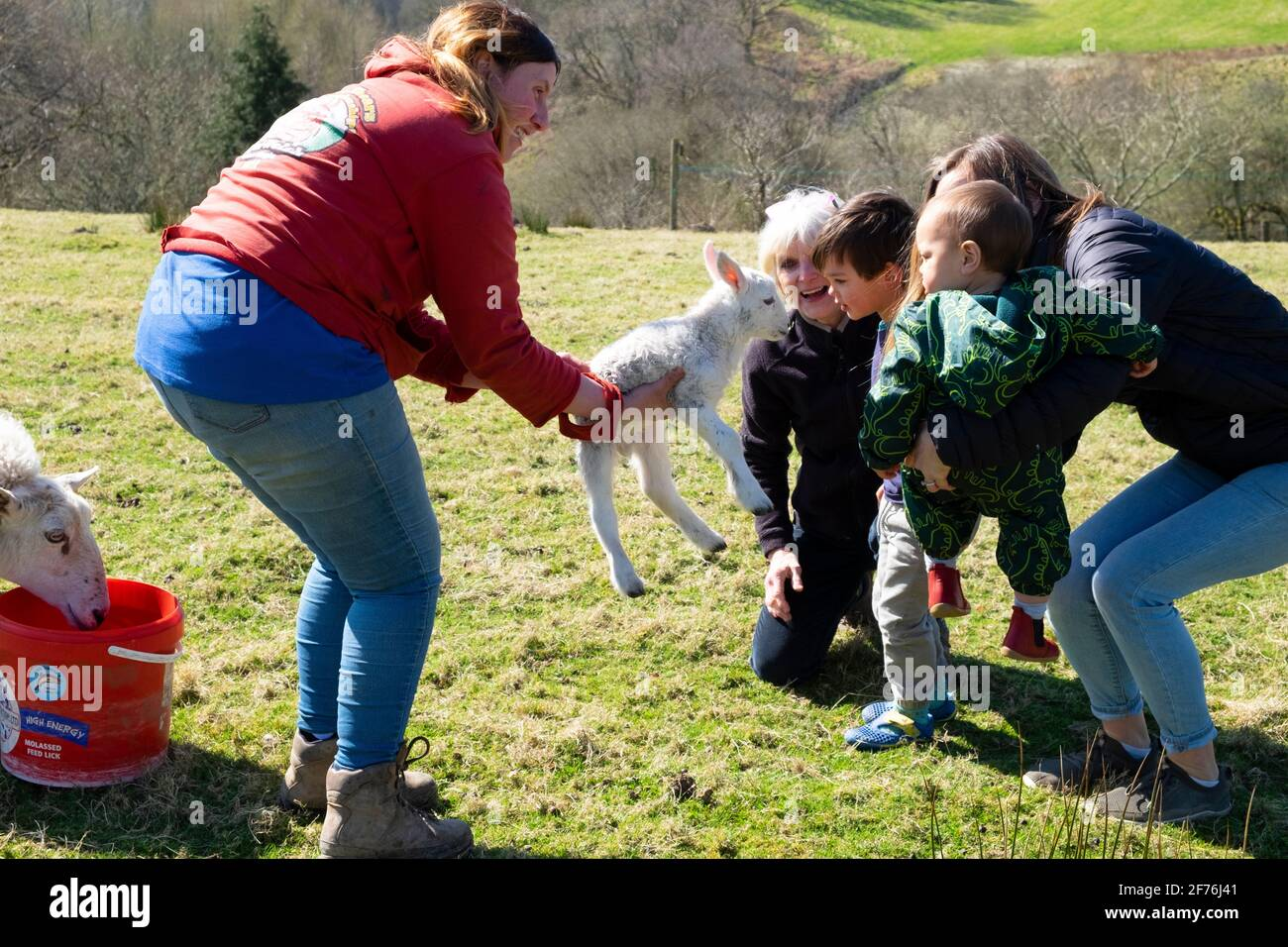 Woman farmer at lambing time showing lamb to little boy and family on Welsh farm in spring Carmarthenshire Wales UK Great Britain KATHY DEWITT Stock Photo