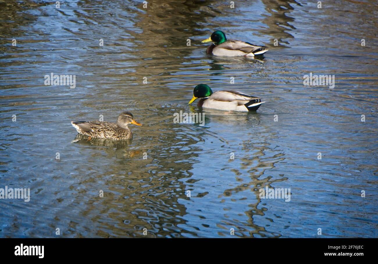 Inglewood Bird Sanctuary & Nature Centre Calgary AB Stock Photo
