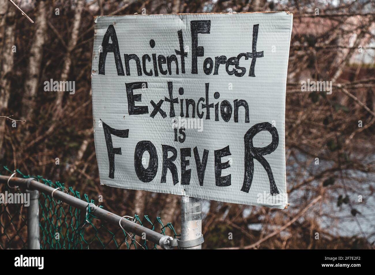 View of sign Ancient Forest Extinction is Forever attached to the fence in Courtenay, Canada. Dying forests concept Stock Photo