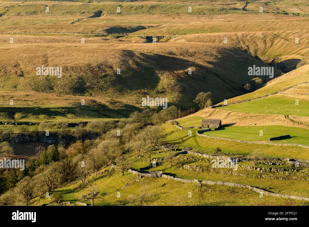 Scenic sunny Wharfedale landscape (upland fells, stone barn, steep hillside, limestone walls, sheep grazing pastures) - Yorkshire Dales, England, UK. Stock Photo