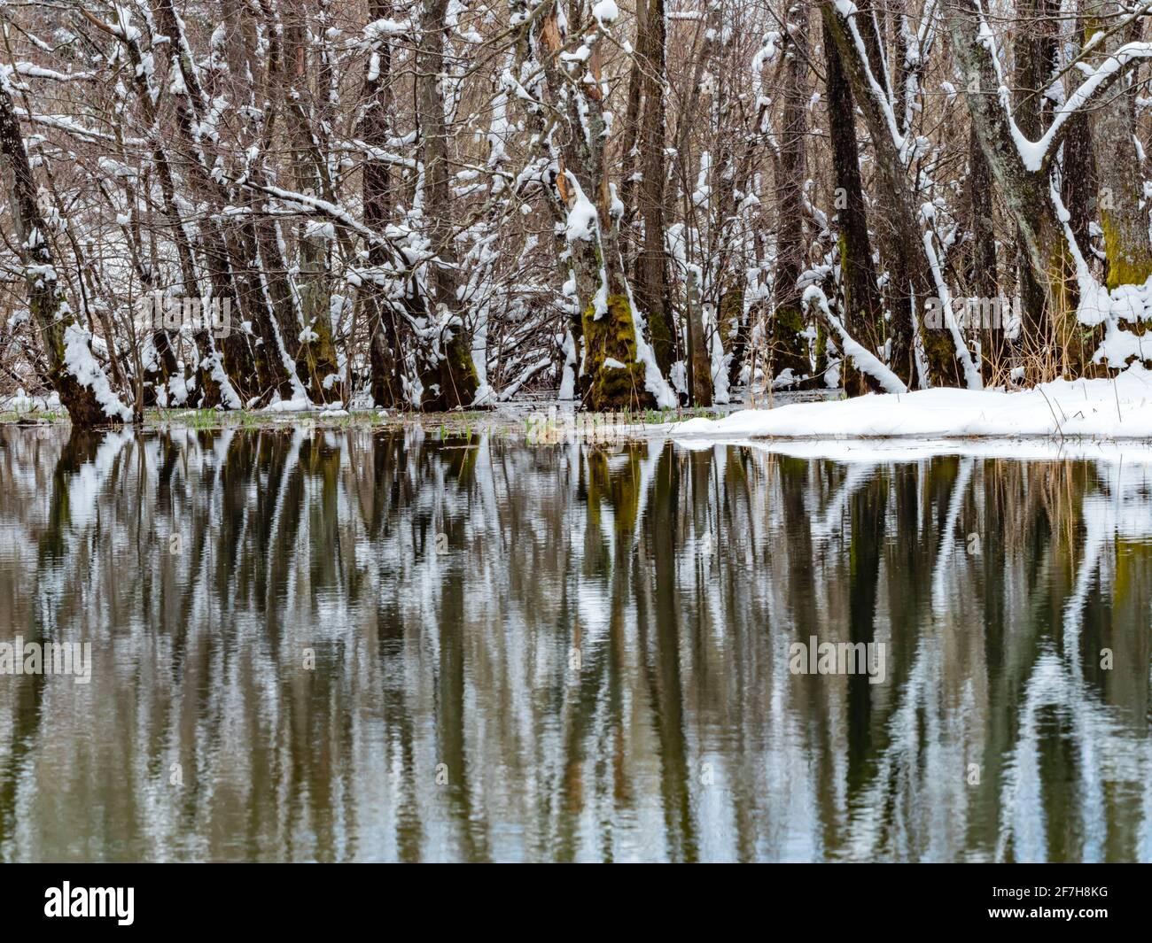Trees lined along lake Bajer town Fuzine in Croatia Europe Stock Photo