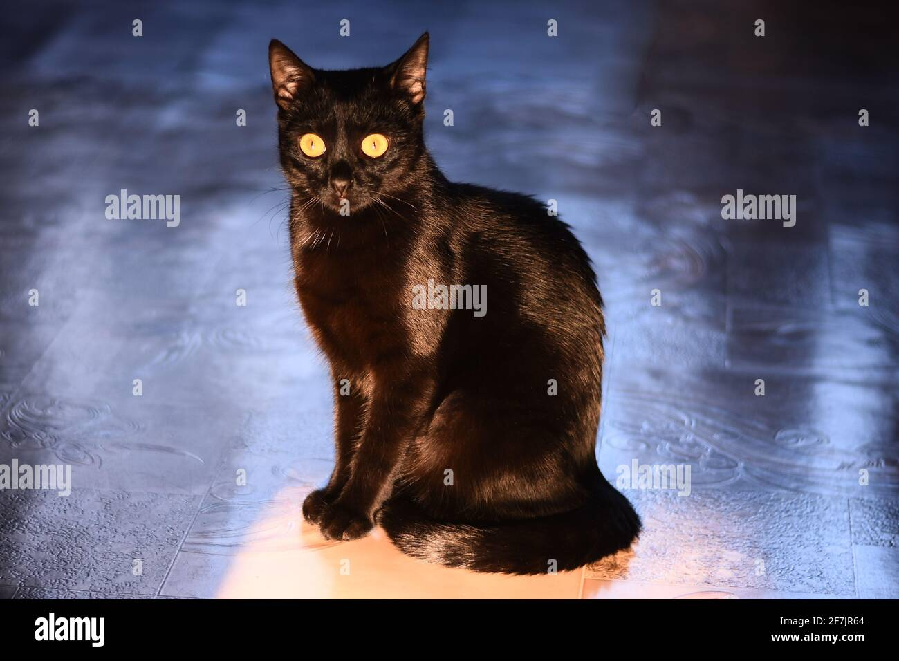 A black cat sits on the floor. Stock Photo
