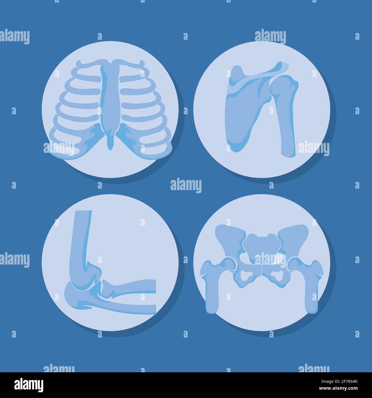 four rheumatology bones Stock Vector