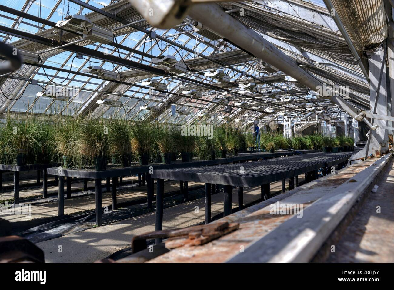 Interior of the greenhouses at the Central Experimental Farm, growing some kind of grasses. Ottawa, Ontario, Canada. Stock Photo