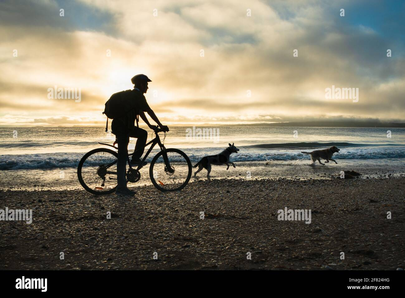Silhouette image of a cyclist riding along the Milford beach with Rangitoto Island in the clouds and two dogs playing on the beach Stock Photo