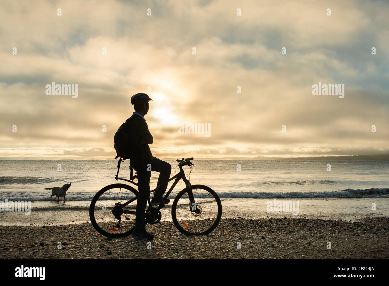 Silhouette image of a cyclist on the bicycle watching the sunrise and dog playing in the water at Milford beach, Auckland Stock Photo