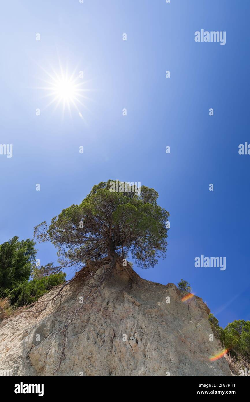 Lonely tree on a cliff under the rays of the sun Stock Photo