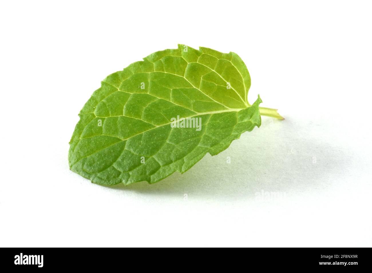 Single mint leaf isolated on white background Stock Photo