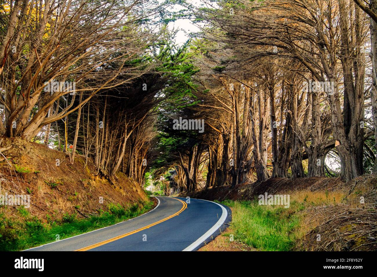Trees and road, Fort Bragg, California, USA Stock Photo