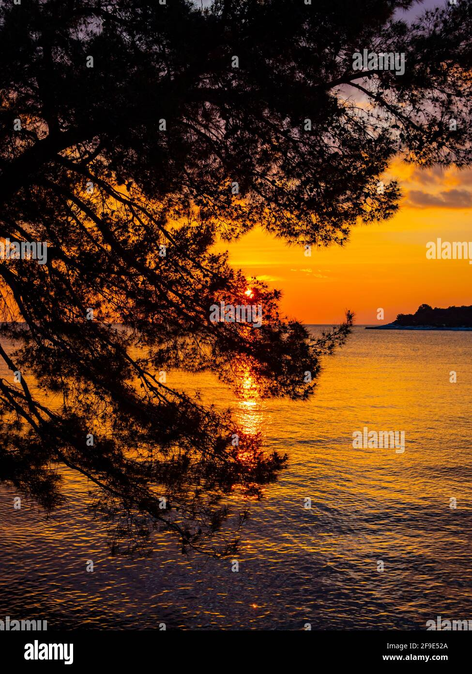 Mediterranean sunset in nature horizon sea seascape silhouette tree branches leaves Stock Photo