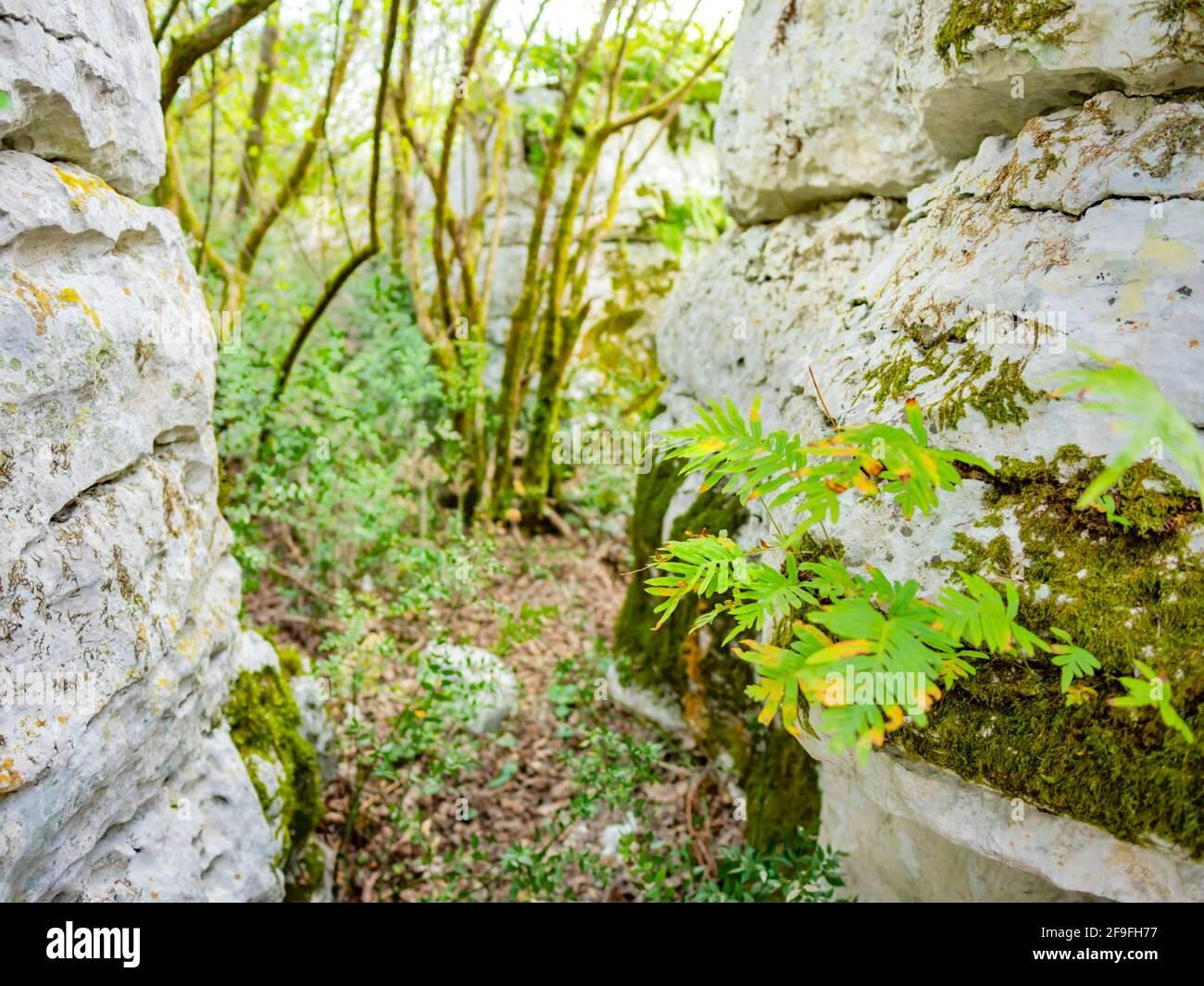 Big rock rocks near Church St Saint Peter on peak crkva Svetog Petra apostola na vrhu on rock between Krancici and Bale in Istria in Croatia Europe Stock Photo