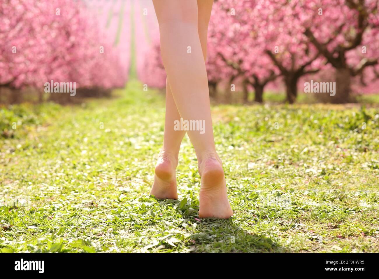 Back view portrait of a beautiful woman waxed legs walking across a pink flowered field in spring season Stock Photo