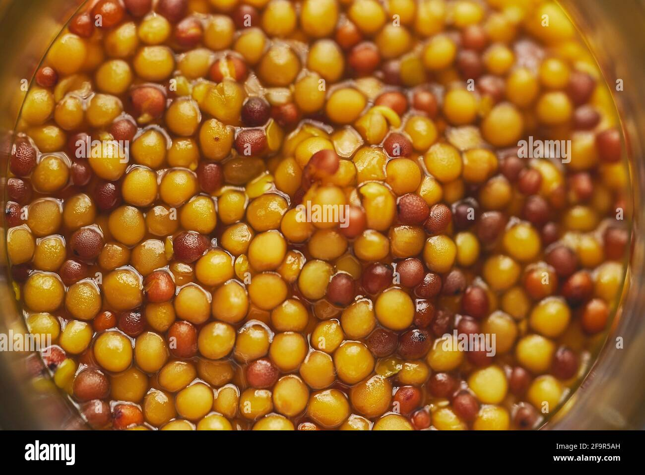 French mustard with whole seeds served in glass jar. Selective focus Stock Photo