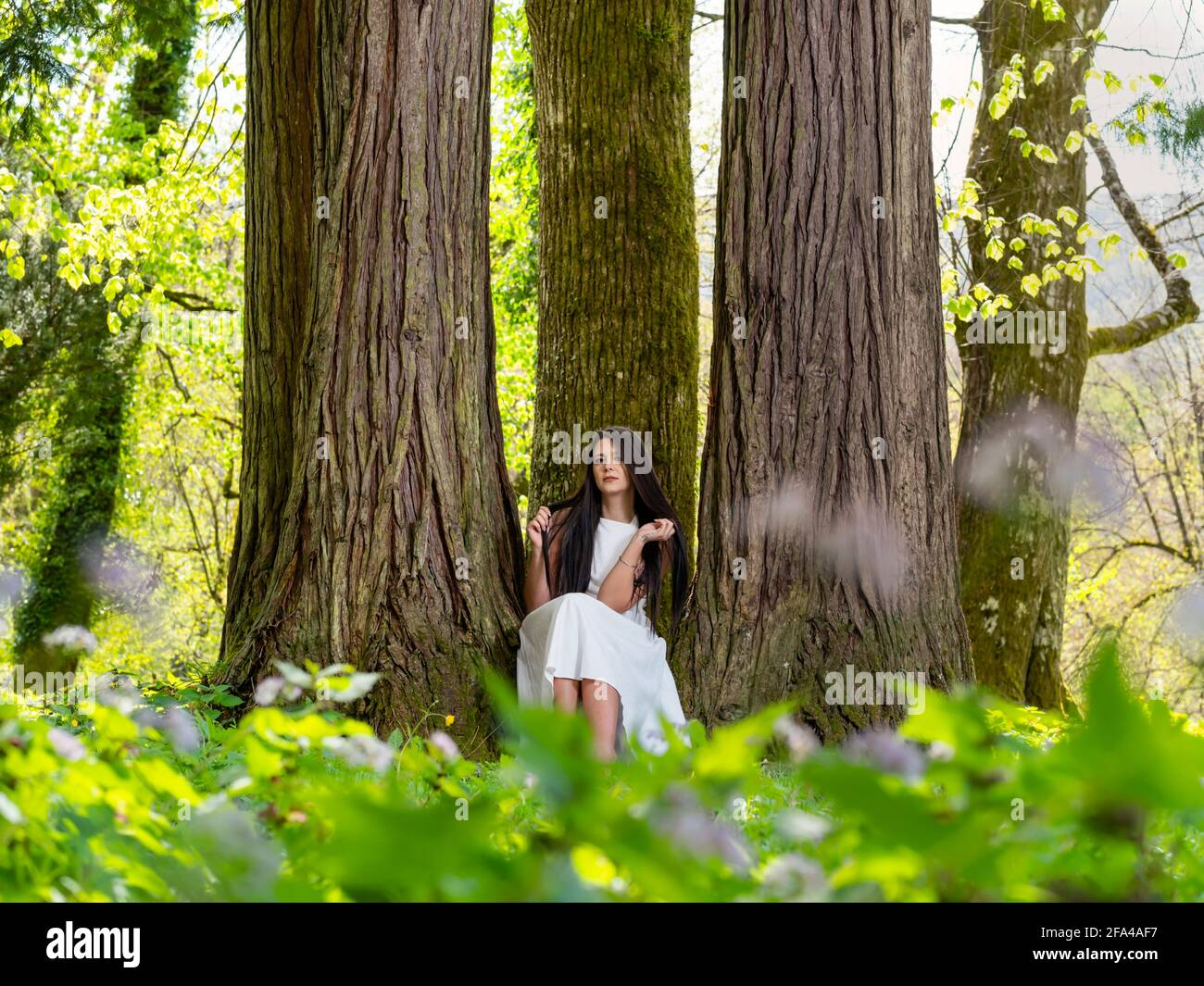 Young woman in nature sitting seated low between amongst big trees facing front frontal view serious eyeshot eyes eye contact looking at camera Stock Photo