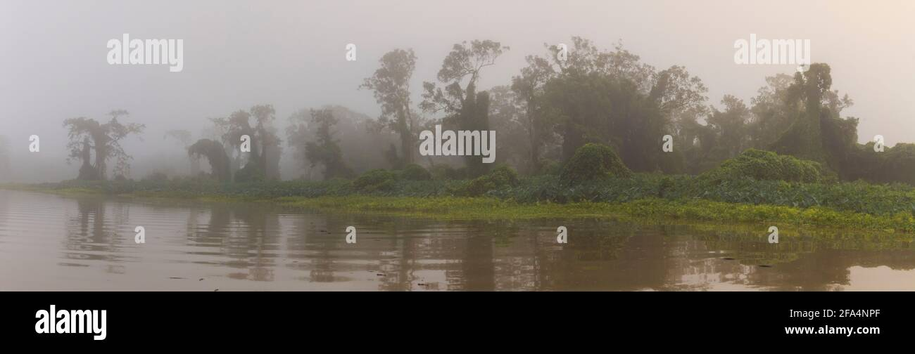 Panoramic view of misty rainforest in early morning light along Rio Chagres in Soberania national park, Republic of Panama. Stock Photo