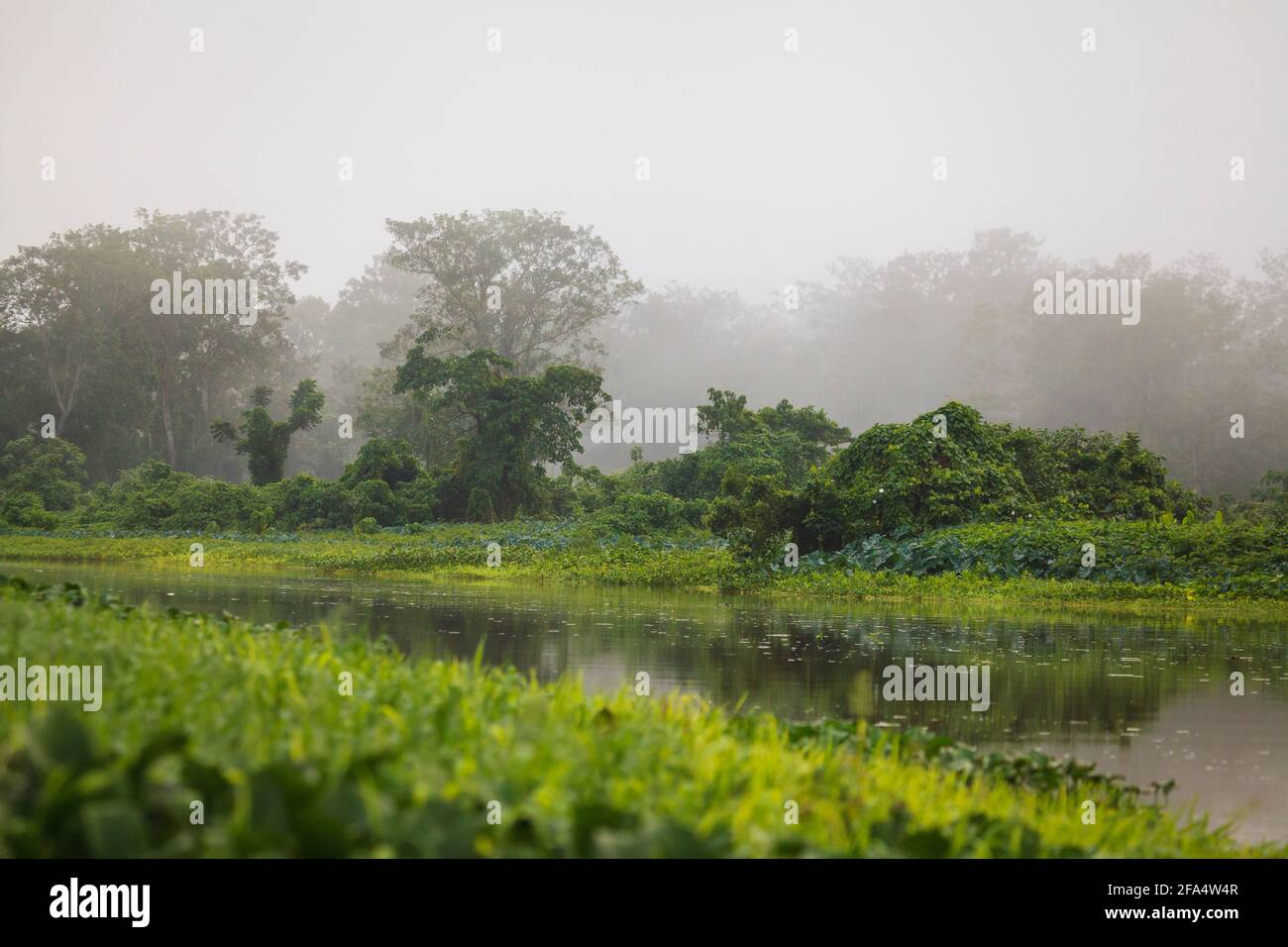 Misty rainforest in early morning light along Rio Chagres in Soberania national park, Republic of Panama. Stock Photo