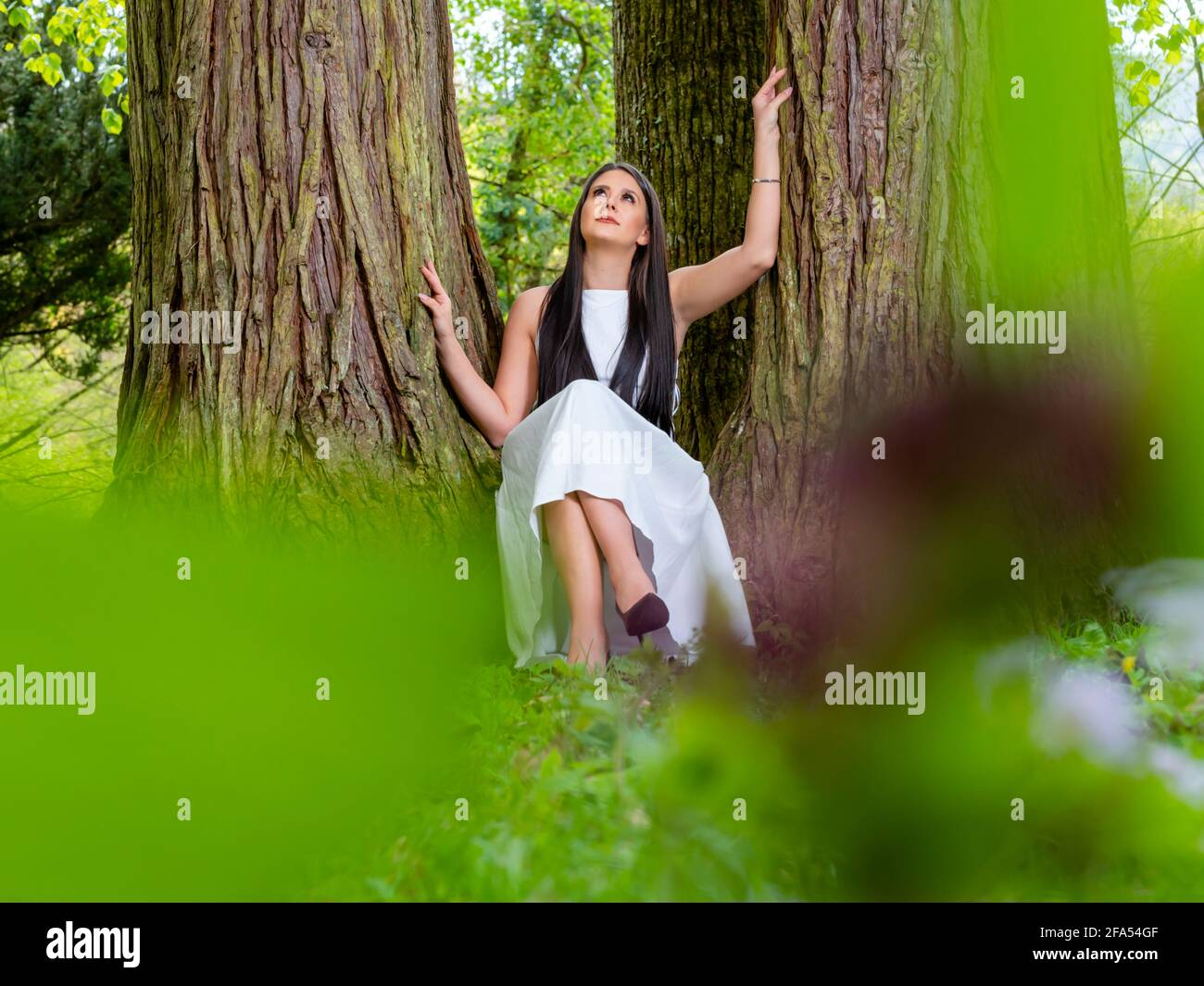 Young woman nature sitting seated low between amongst big trees facing front frontal view looking up upwards serious crossed legs heels cross legged Stock Photo