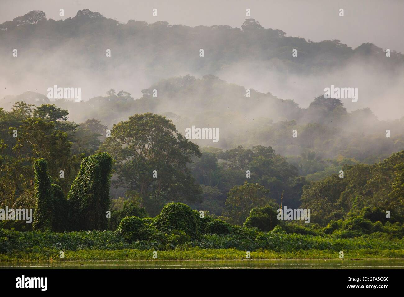 Misty rainforest in early morning light on the eastern side of Rio Chagres, Soberania national park, Republic of Panama, Central America. Stock Photo