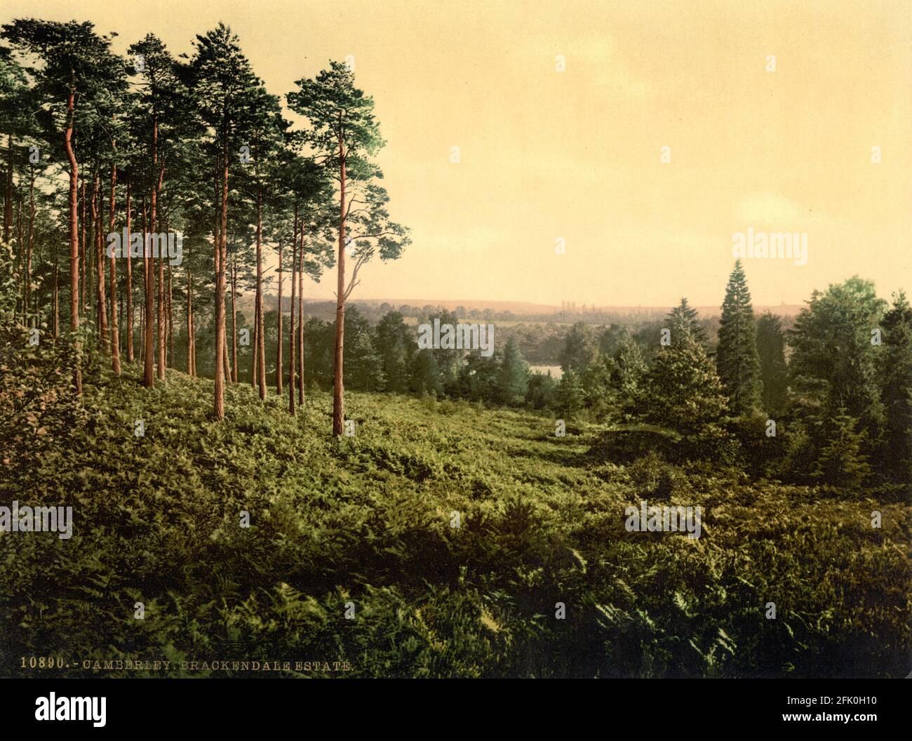 Brackendale Estate, Camberley in Surrey circa 1890-1900 Stock Photo