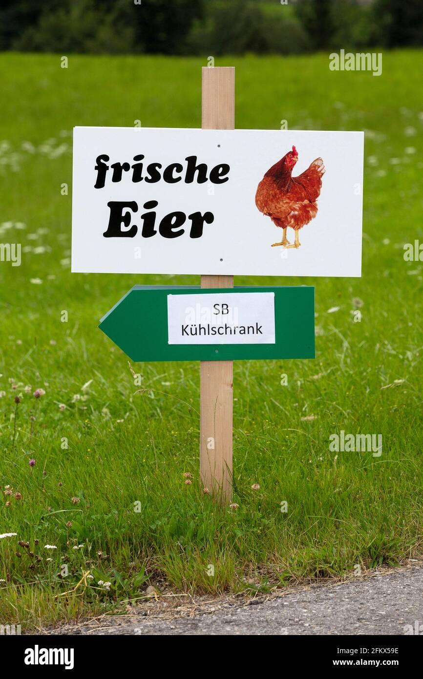 Freshness Eggs, Self Marketing Stock Photo