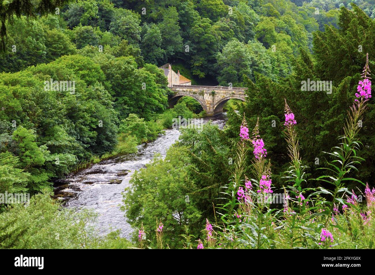 Green Bridge and River Swale surrounded by lush trees with bright pink rosebay willowherb in the foreground, Richmond, North Yorkshire, England, UK Stock Photo