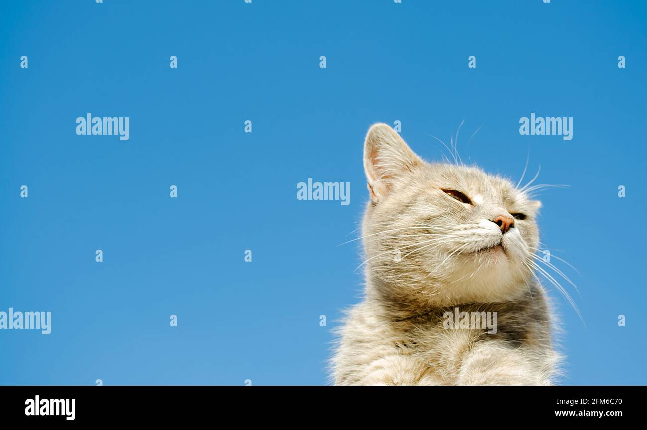 Funny gray cat on a background of blue sky. Pet portrait. Striped kitten. Animal. Copy space. Focus on your face Stock Photo