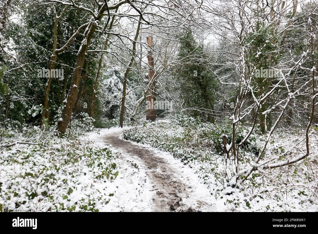 Snowy Winter woodland Stock Photo