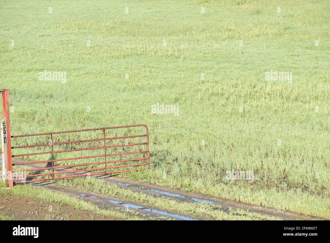 Red farm gate near a grassy field Stock Photo