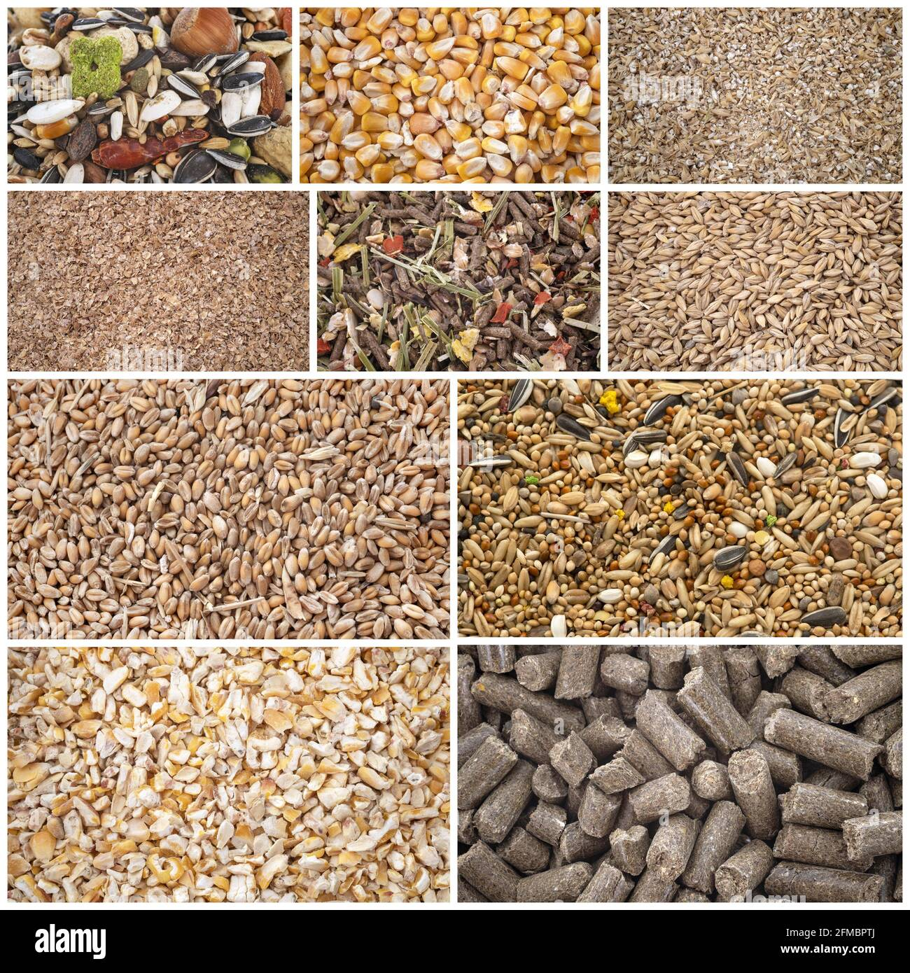composite picture of cereals for animal food Stock Photo