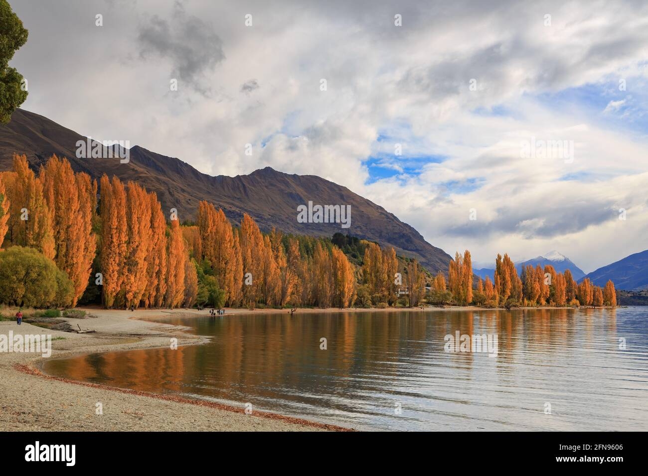 Lake Wanaka, New Zealand, in autumn. The shore of the lake is surrounded by poplars with bright fall foliage Stock Photo